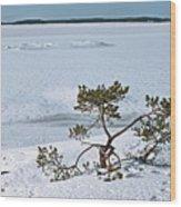 Pine On A Rock Wood Print