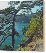 Pine Over The Bay Wood Print