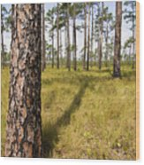 Pine Savanna II Wood Print