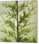 Pine Shower Wood Print