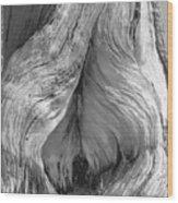Pine, Split Trunk, Sierra Nevada Mountains, Ca Wood Print
