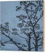 Pine Tree Antigua Guatemala Wood Print