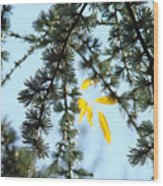 Pine Tree Art Prints Blue Sky Yellow Fall Leaves Wood Print