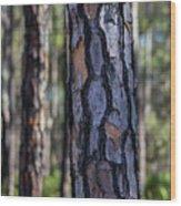 Pine Tree Bark Wood Print