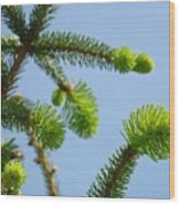 Pine Tree Branches Art Prints Blue Sky Botanical Baslee Troutman Wood Print