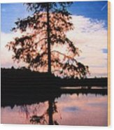 Pine Tree By Peck Lake 5 Wood Print