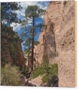 Pine Tree Canyon Wood Print
