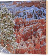 Pine Tree In Bryce Canyon Wood Print