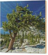 Pine Tree In Yosemite Wood Print