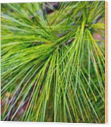 Pine Tree Needles Wood Print