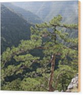 Pine Tree On Mountain Landscape Wood Print