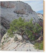Pine Tree On Top Of Angels Landing In Zion Wood Print