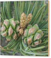 Pine Tree Seeds Wood Print