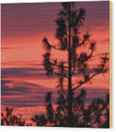 Pine Tree Sunrise Wood Print