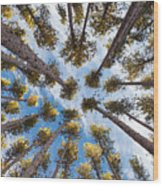 Pine Tree Vertigo Wood Print