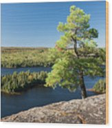 Pine Tree With A View Wood Print