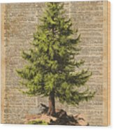 Pine Tree,cedar Tree,forest,nature Dictionary Art,christmas Tree Wood Print