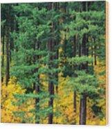 Pine Trees In Autumn Wood Print