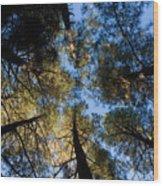 Pine Trees Near Ruidoso Nm Wood Print