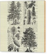 Pine Trees Study Black And White  Wood Print