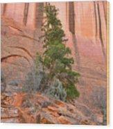 Pine Varnish Wood Print