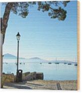 Pine Walk Morning, Puerto Pollensa Wood Print