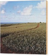 Pineapple Fields Wood Print