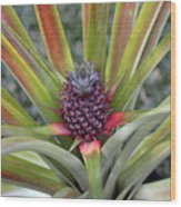 Pineapple, Oahu Wood Print