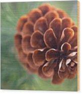 Pinecone-2 Wood Print