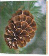 Pinecone-3 Wood Print