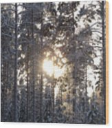 Pines 2 Wood Print
