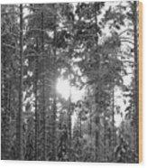 Pines 3 Wood Print