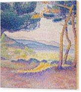 Pines Along The Shore, 1896 Wood Print