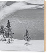 Pines In Snow Drifts Black And White Wood Print