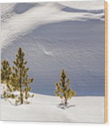 Pines In The Snow Drifts Wood Print