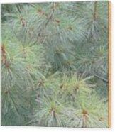 Pines Wood Print
