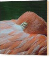 Pink 1 C Wood Print