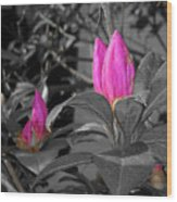 Pink-1 Wood Print