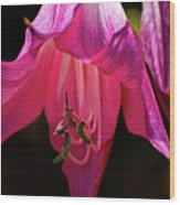 Pink Aglow Wood Print