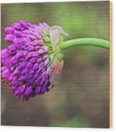 Pink Allium Wood Print