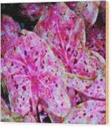 Pink Caladium Wood Print