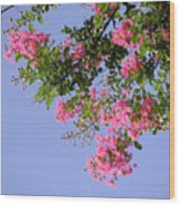 Pink And Blue Canopy Wood Print