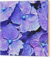 Pink And Blue Hydrangea 4 Wood Print