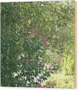 Pink And Green Path Wood Print