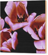 Pink And Orange Tulips Wood Print