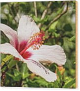 Pink And Red Hibiscus Wood Print