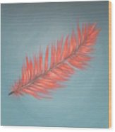 Pink And Teal Feather Wood Print