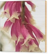 Pink And White Bells Wood Print
