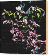 Pink And White Blossoms Wood Print