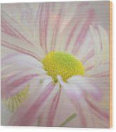 Pink And White  Wood Print